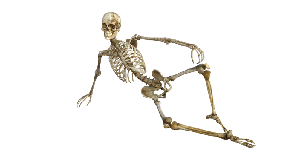 skeleton, bones, anatomy